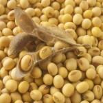 manfaat kacang kedelai untuk tubuh kita